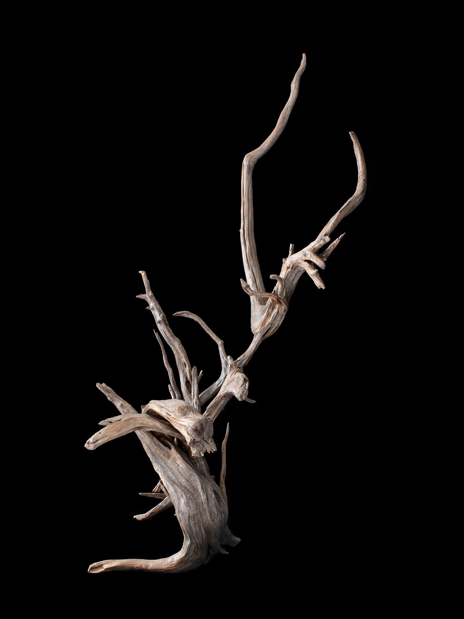 Andròmines del bosc - 4 - BadiaCasanova